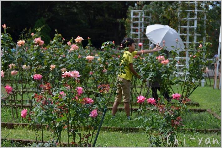 バラの香りの 「代々木公園」_e0219011_20125244.jpg