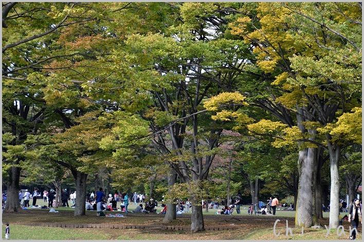 バラの香りの 「代々木公園」_e0219011_2019278.jpg