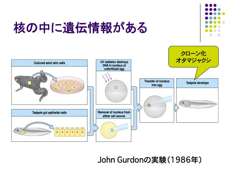 大隅典子の仙台通信      ガードンの研究のオリジナリティ