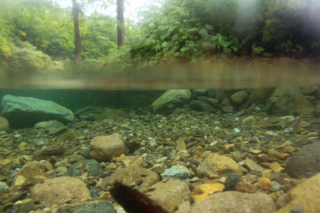 奥只見の魚を育てる会_e0150433_13463568.jpg