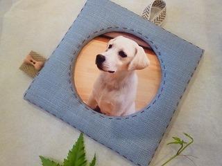 photo frame  犬のホネのボタンと空色♪_a0165160_6413279.jpg