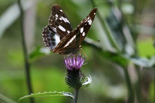ジュウガツサクラと、原種シクラメン(武蔵丘陵森林公園-4)_f0030085_20365525.jpg