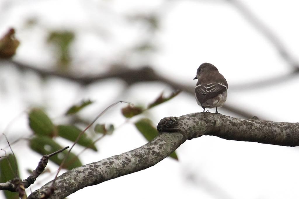 我が市で撮った91番目の鳥/今朝のカワセミ/10月りゅう座流星群_b0024798_10482611.jpg