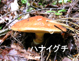 f0207325_1471940.jpg