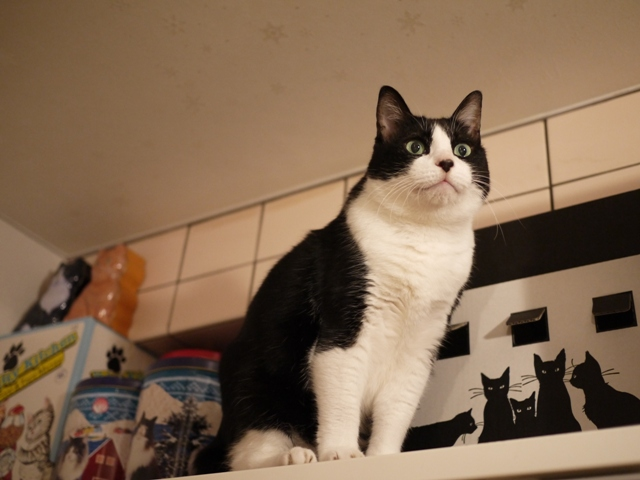 黒猫ハウス猫 空編。_a0143140_21345066.jpg