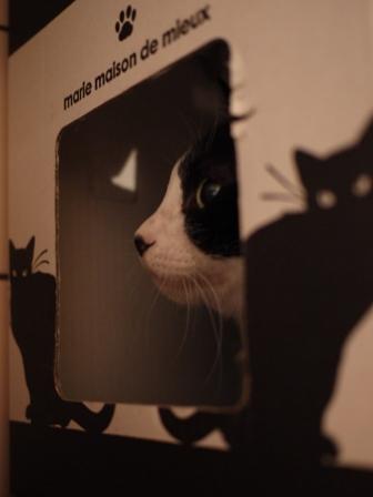 黒猫ハウス猫 空編。_a0143140_21351961.jpg