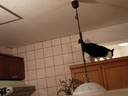 黒猫ハウス猫 空編。_a0143140_21364221.jpg