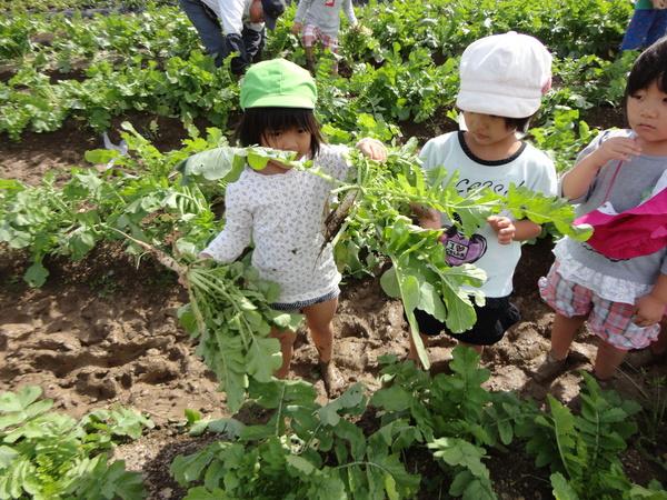 農園情報(幼児組)_a0180348_16245738.jpg