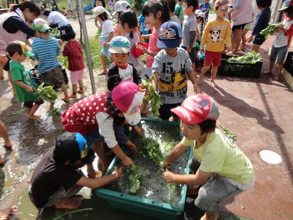 農園情報(幼児組)_a0180348_1639505.jpg