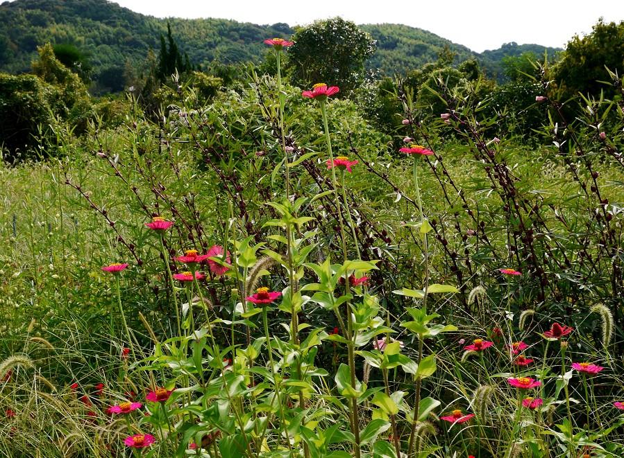 里山の風景_b0093754_23121379.jpg