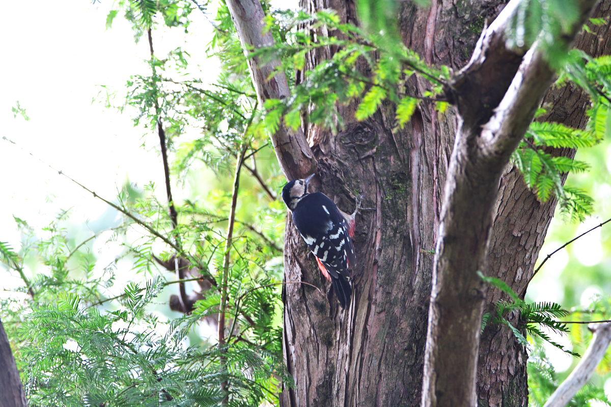 静かな森へ_d0125872_013774.jpg