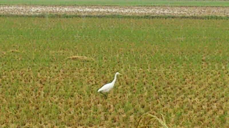巨大なタラが来た!& 白サギを見た!_d0182179_18131530.jpg