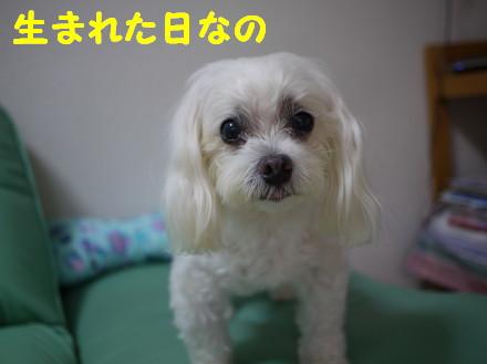 b0193480_1591513.jpg