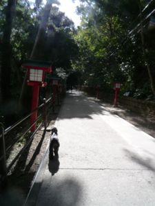 坊ちゃん高尾山を制覇…_d0266681_23523849.jpg