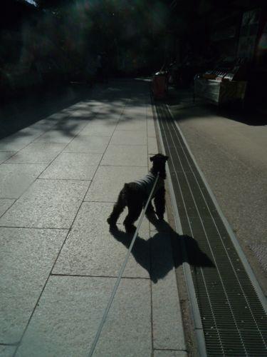 坊ちゃん高尾山を制覇…_d0266681_23532841.jpg
