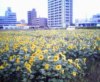 白石村横丁通_f0078286_9471915.jpg