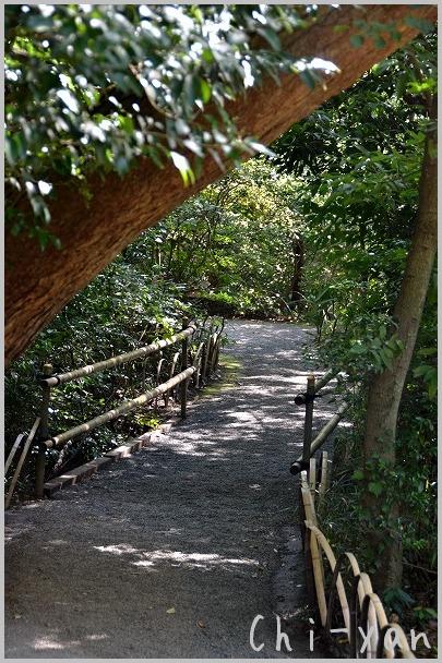 タヌキも住んでる 「明治神宮」_e0219011_1817426.jpg