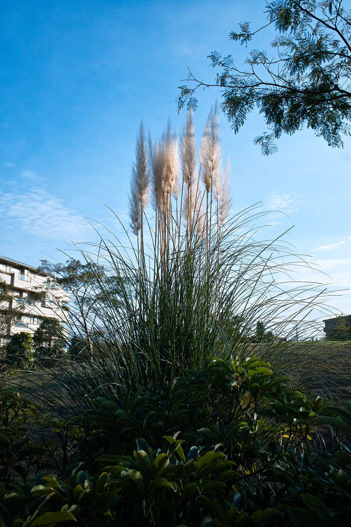 可憐なトレニア ~ゆいの花公園の秋~_c0223825_1225121.jpg