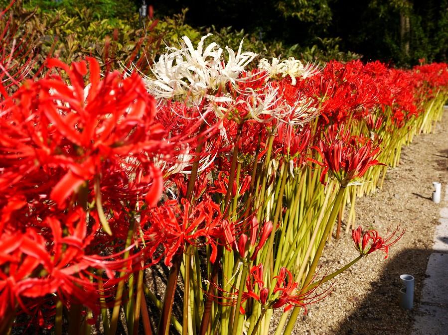 和歌山県植物公園緑花センター _b0093754_22331980.jpg