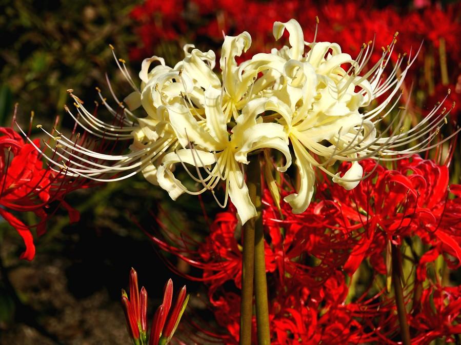 和歌山県植物公園緑花センター _b0093754_22333234.jpg