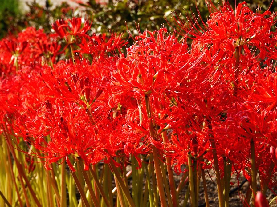和歌山県植物公園緑花センター _b0093754_22335014.jpg
