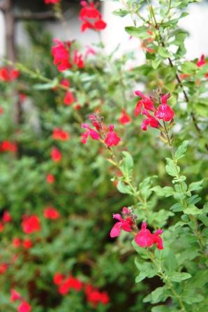 自然の色_a0163160_22321036.jpg