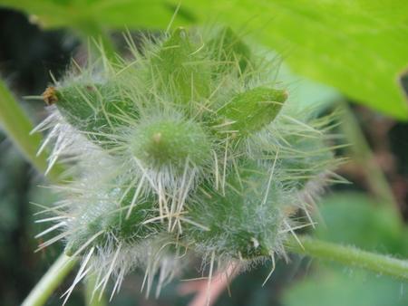 H24年10月度うみべの森を育てる会植物観察 in せんなん里海公園_c0108460_14165795.jpg