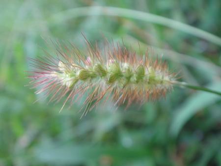 H24年10月度うみべの森を育てる会植物観察 in せんなん里海公園_c0108460_14181172.jpg