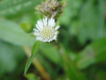 H24年10月度うみべの森を育てる会植物観察 in せんなん里海公園_c0108460_14183780.jpg