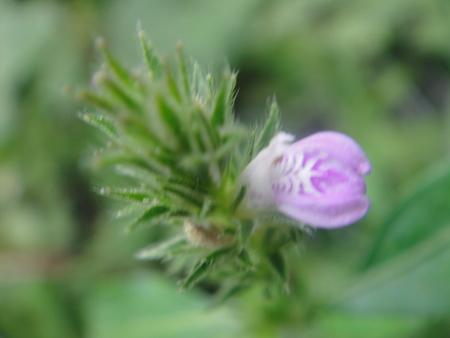 H24年10月度うみべの森を育てる会植物観察 in せんなん里海公園_c0108460_14204621.jpg