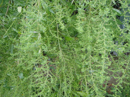 H24年10月度うみべの森を育てる会植物観察 in せんなん里海公園_c0108460_1421517.jpg