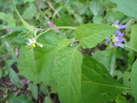 H24年10月度うみべの森を育てる会植物観察 in せんなん里海公園_c0108460_1425733.jpg