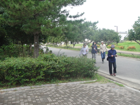 H24年10月度うみべの森を育てる会植物観察 in せんなん里海公園_c0108460_14295318.jpg