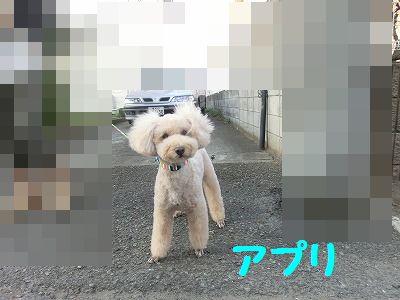 e0222588_17282482.jpg