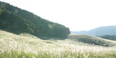 ぶらり箱根・仙石原のススキ_d0165298_10492921.jpg