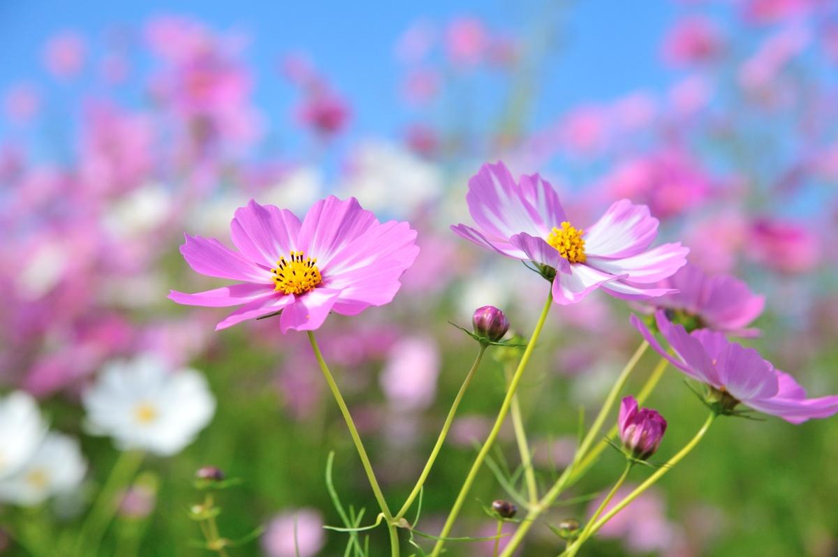 花とおじさん_c0220824_621477.jpg