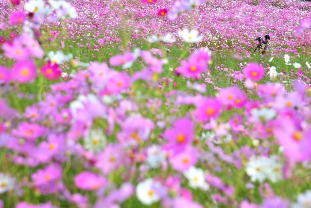 花とおじさん_c0220824_6274013.jpg