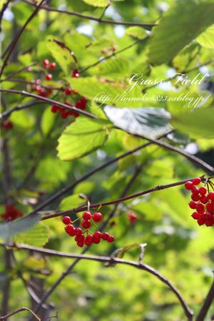 赤い実とセレブなチョコ_a0275527_22593516.jpg