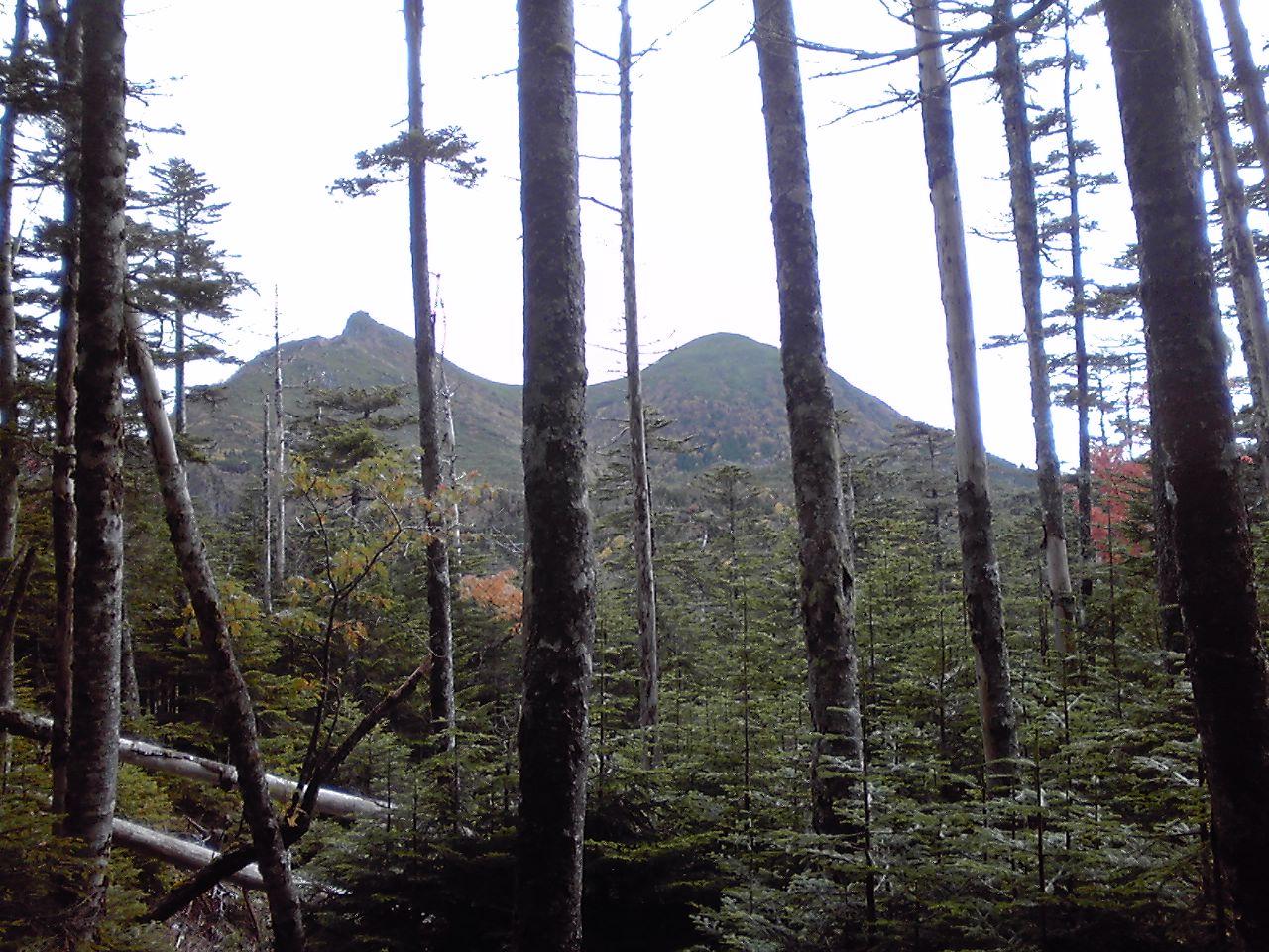 森の中から見える天狗岳_e0155231_79490.jpg
