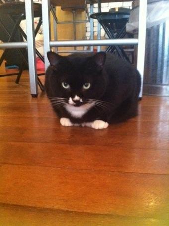 Cat-Nap  no.3_d0143733_15385518.jpg