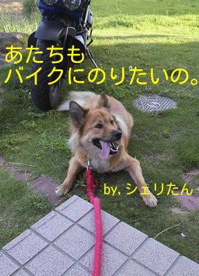e0225144_154488.jpg