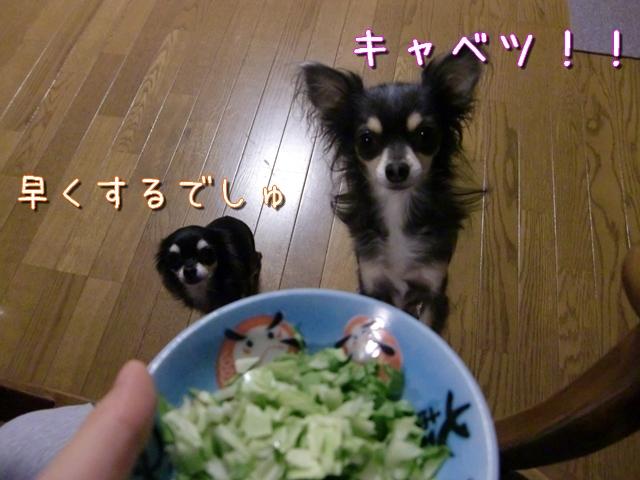 【チワワーズ】HAPPY☆BIRTHDAY こなた 4歳_b0122046_19302894.jpg