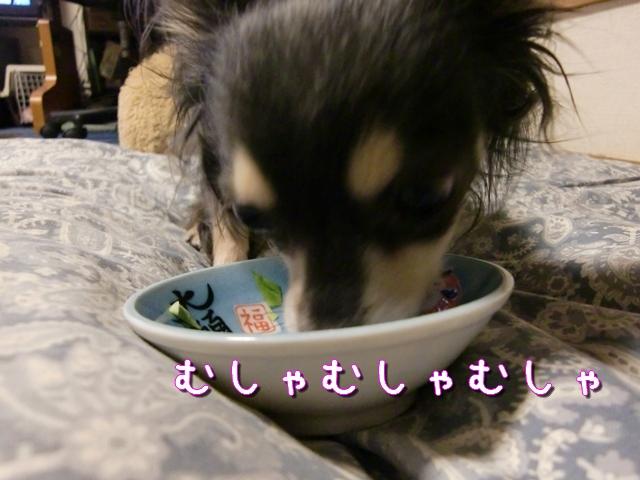 【チワワーズ】HAPPY☆BIRTHDAY こなた 4歳_b0122046_19315793.jpg