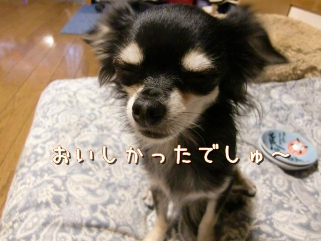 【チワワーズ】HAPPY☆BIRTHDAY こなた 4歳_b0122046_1933912.jpg
