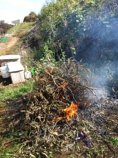今朝切り落とした夏野菜の枝&雑草を燃やします_c0222448_17564111.jpg