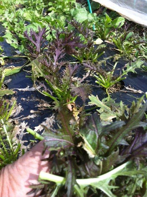 今朝切り落とした夏野菜の枝&雑草を燃やします_c0222448_17565786.jpg