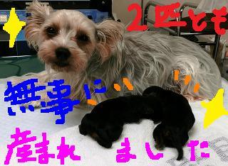 帝王切開のope_b0059154_16345568.jpg