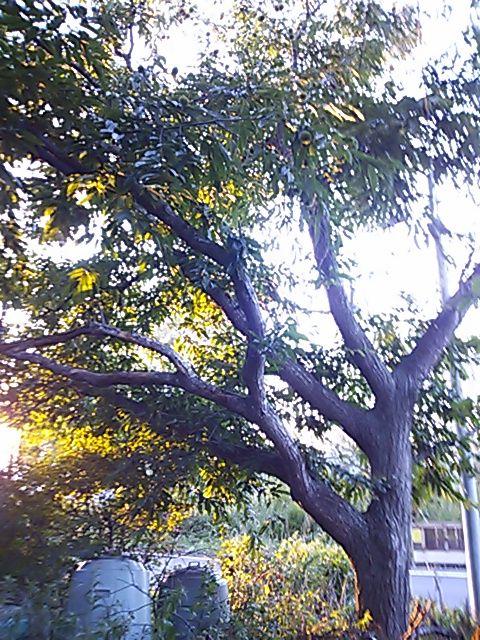 秋ですね。_d0014014_013333.jpg