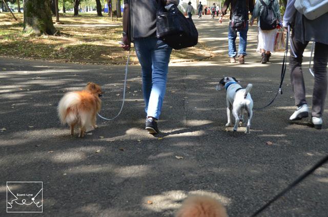 お散歩グループクラスレポート_c0099133_18135933.jpg