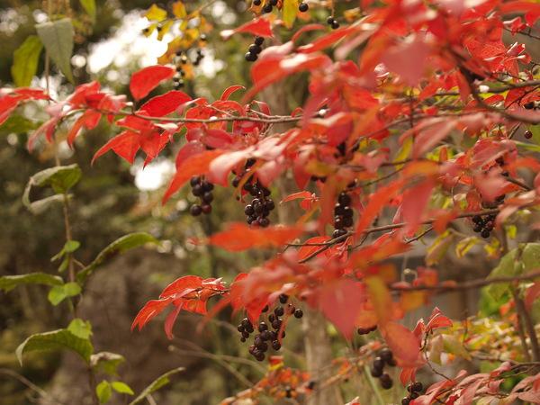 秋の様子 2012_a0062869_1529191.jpg